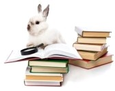 Bunny on a Book